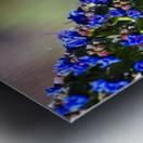 Veronica Flower Of  Spring Metal print