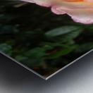 Peach Rose Metal print