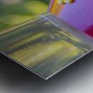 DSC_8172 Metal print