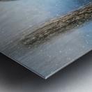 Barred Owl Solitude Metal print