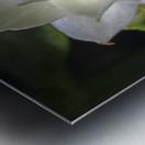 Serein Metal print