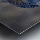 Great Grey Owl - Hanging on Metal print