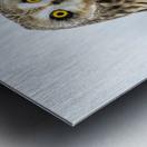 Short Eared Owl - Eyes wide open Metal print