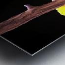 Colorful Bird on branch Metal print