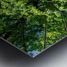 Tree Than Owns Itself   Athens GA 06567 Metal print