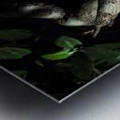 old bonsai black background Metal print