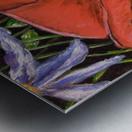 Folding Poppy Metal print