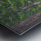 Fairies Forest Metal print