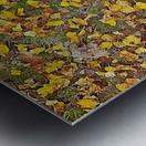 An Autumn Carpet Metal print