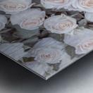 Full frame of Roses Metal print