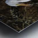 Great White Egret ap 2765 Metal print