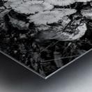 Flowers ap 2222 B&W Metal print
