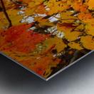 Maple Leaves ap 1589 Metal print