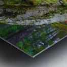 Moss   Lichen ap 2196 Metal print