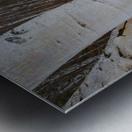 White Birch ap 2242 Metal print