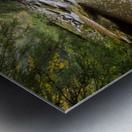 Fall Color ap 2453 Metal print