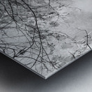 Morning Fog ap 1570 B&W Metal print