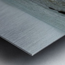 Driftwood ap 2257 Metal print