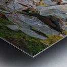 Nature apmi 1606 Metal print