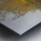 Alpine Tundra apmi 1846 Metal print