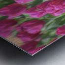 Fantasically Fuschia Tulips Metal print