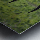D8061889 B94D 4585 85A6 654F34B6CEB0 Metal print