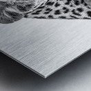 Leopard - B&W Metal print