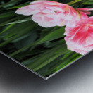 Double Pink Tulips Metal print