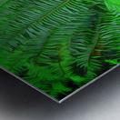 Just Ferns Metal print