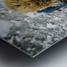300 Carr   Metal print