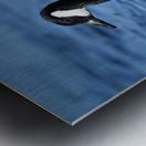 Canada Goose on water Metal print