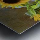 It's What Sunflowers Do - Flower Art by Jordan Blackstone Metal print