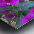 Purple Fusion Metal print