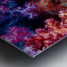 Coral Hind Metal print