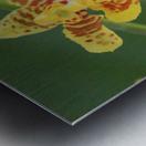 orchid3 Metal print
