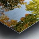 Autumn Trees Low-Angle Metal print