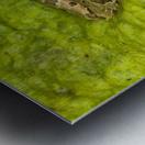 A Rio Grande Leopard Frog Sitting On A Bed Of Algae Metal print