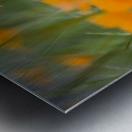 Close Up Of Orange Poppy Flowers Metal print