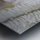 Frost On Pine Tree Metal print