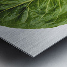 Agriculture - Closeup of a Romaine lettuce leaf on a white surface, studio. Metal print