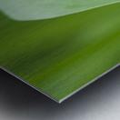 A caterpillar eats grass; Astoria, Oregon, United States of America Metal print