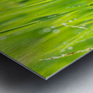 Close up of fresh grass with water drops in the early morning Metal print