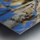 Golden Eagle VP3 Metal print