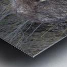 Herd of Javelinas VP2 Metal print