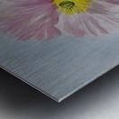 Pink Poppies Metal print