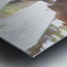 Bird of Prey In-Flight 1 Abstract Metal print