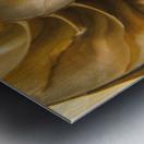 Inside Of Nautilus Shell Metal print