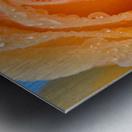 Orange Rose With Dew Metal print