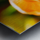 Extreme Close-Up Of Bright Orange Day Lily. Metal print