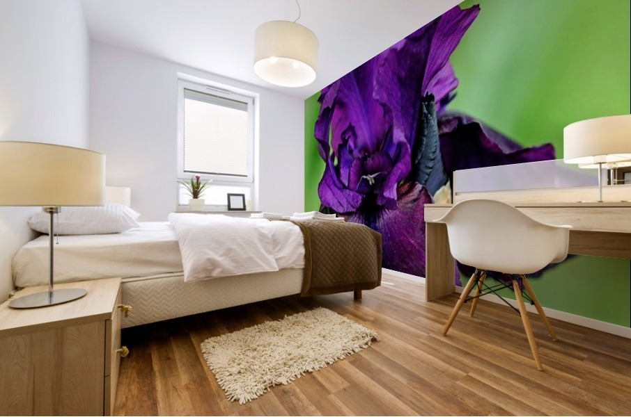 Deep Purple Iris Mural Print